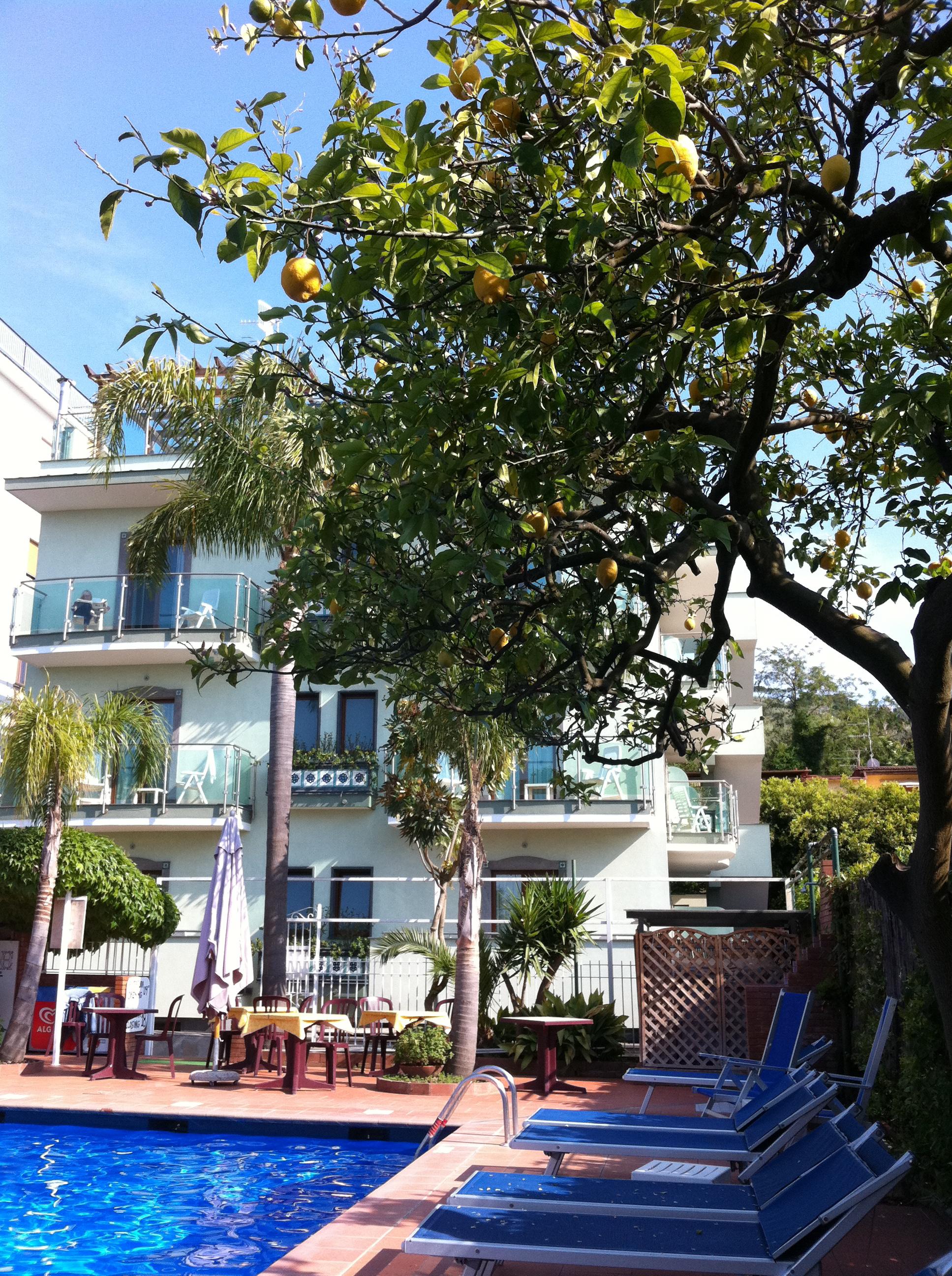 Hotel Gardenia Pool